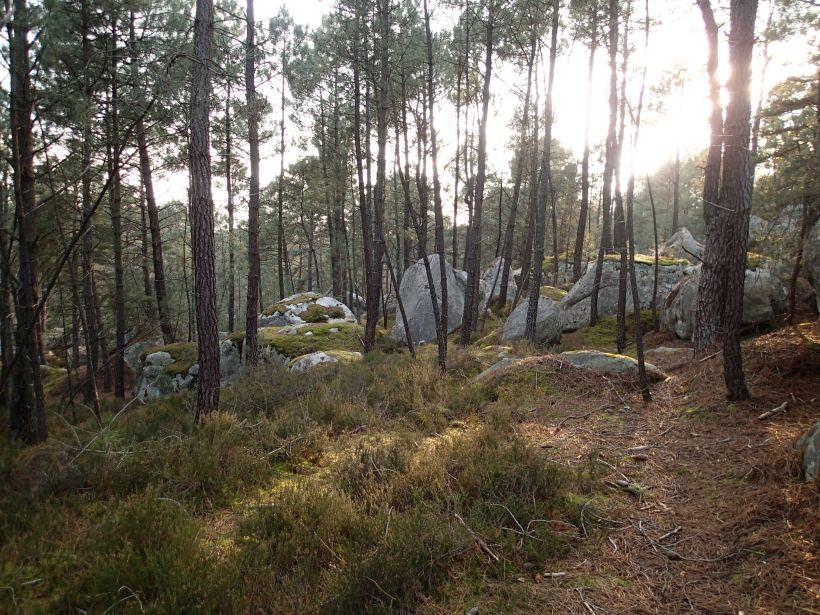 Bouldern in Bleau